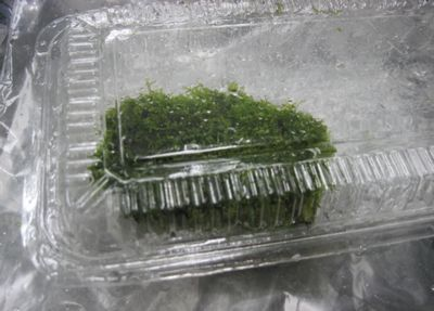 海苔の佃煮1